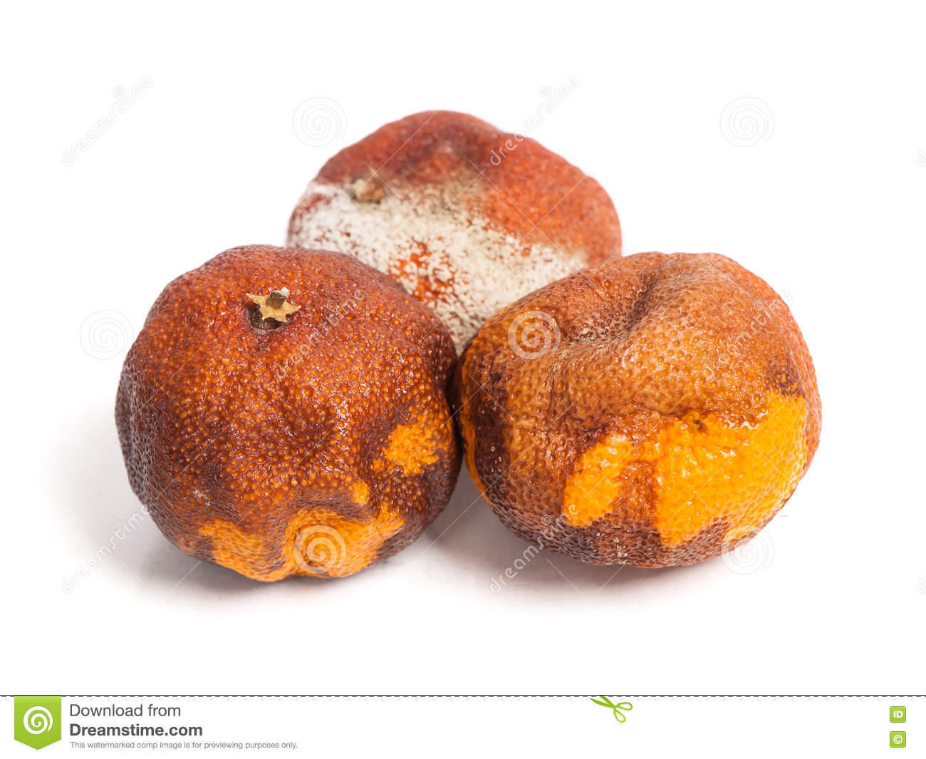 Rotten oranges royalty free stock image cartoondealer for Musty odor definition