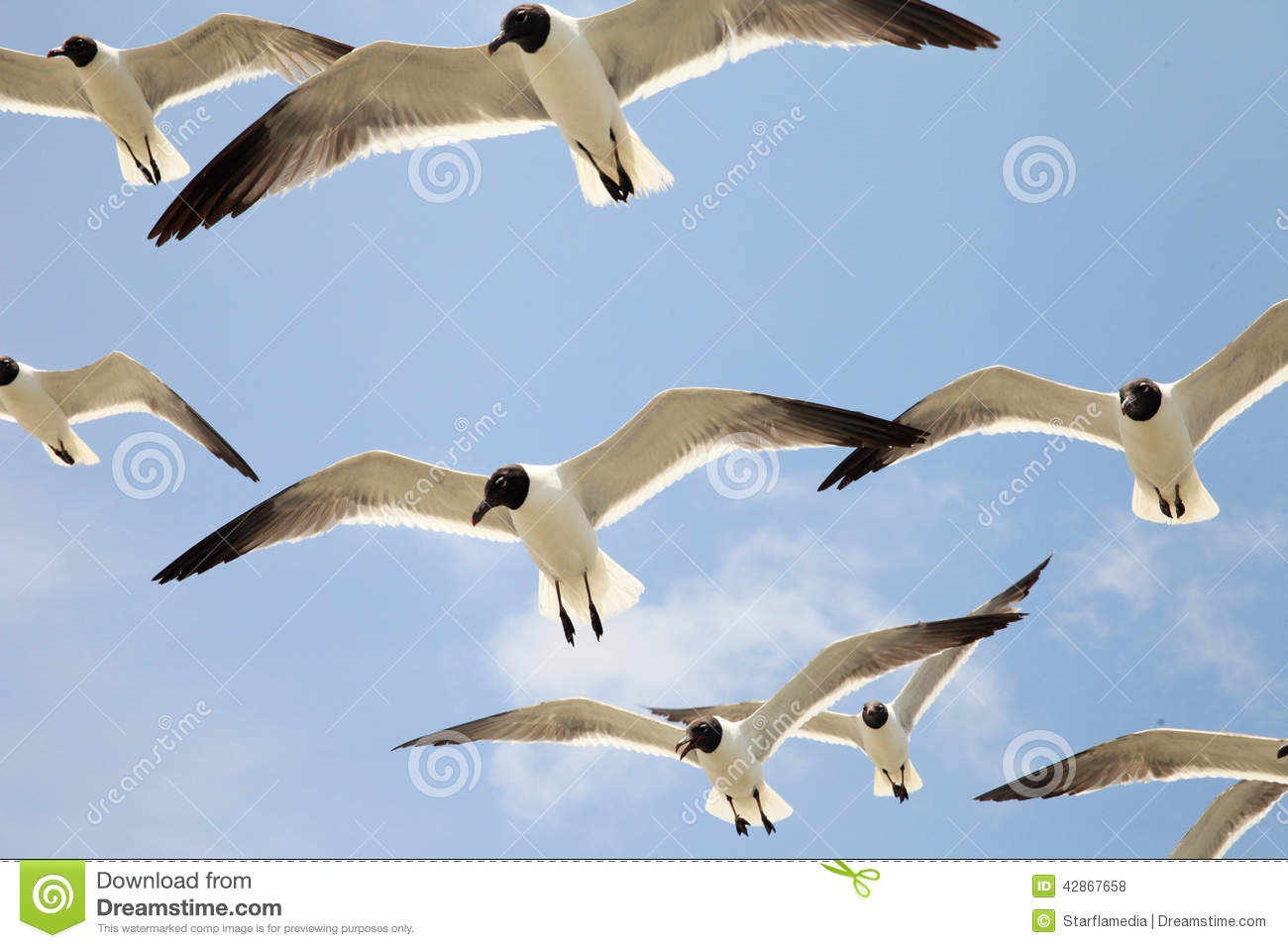 Flying Birds Free Stock Photos Download 3 416 Free Stock: Group Of Seagulls Stock Photo. Image Of Grace, Group