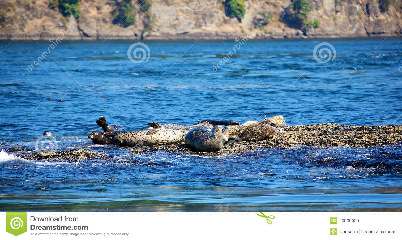 A Group Of Seals 59