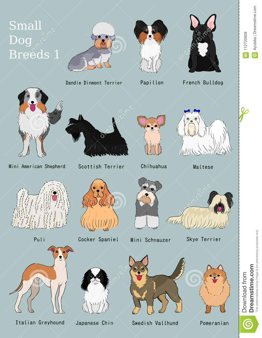 Group Of Small Dogs Breeds Hand Drawn Chart Stock Vector