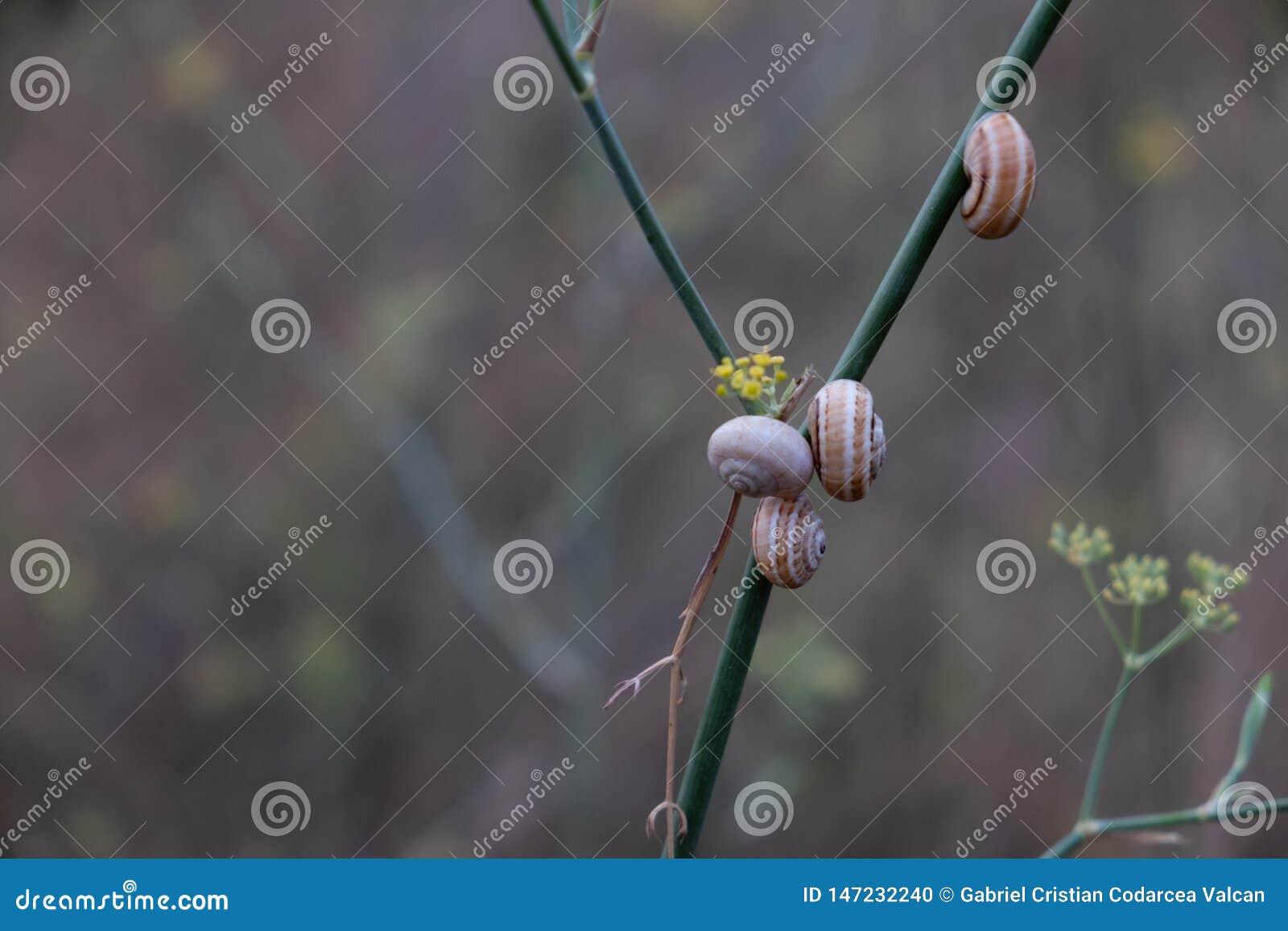Group of snails on the same bush branch