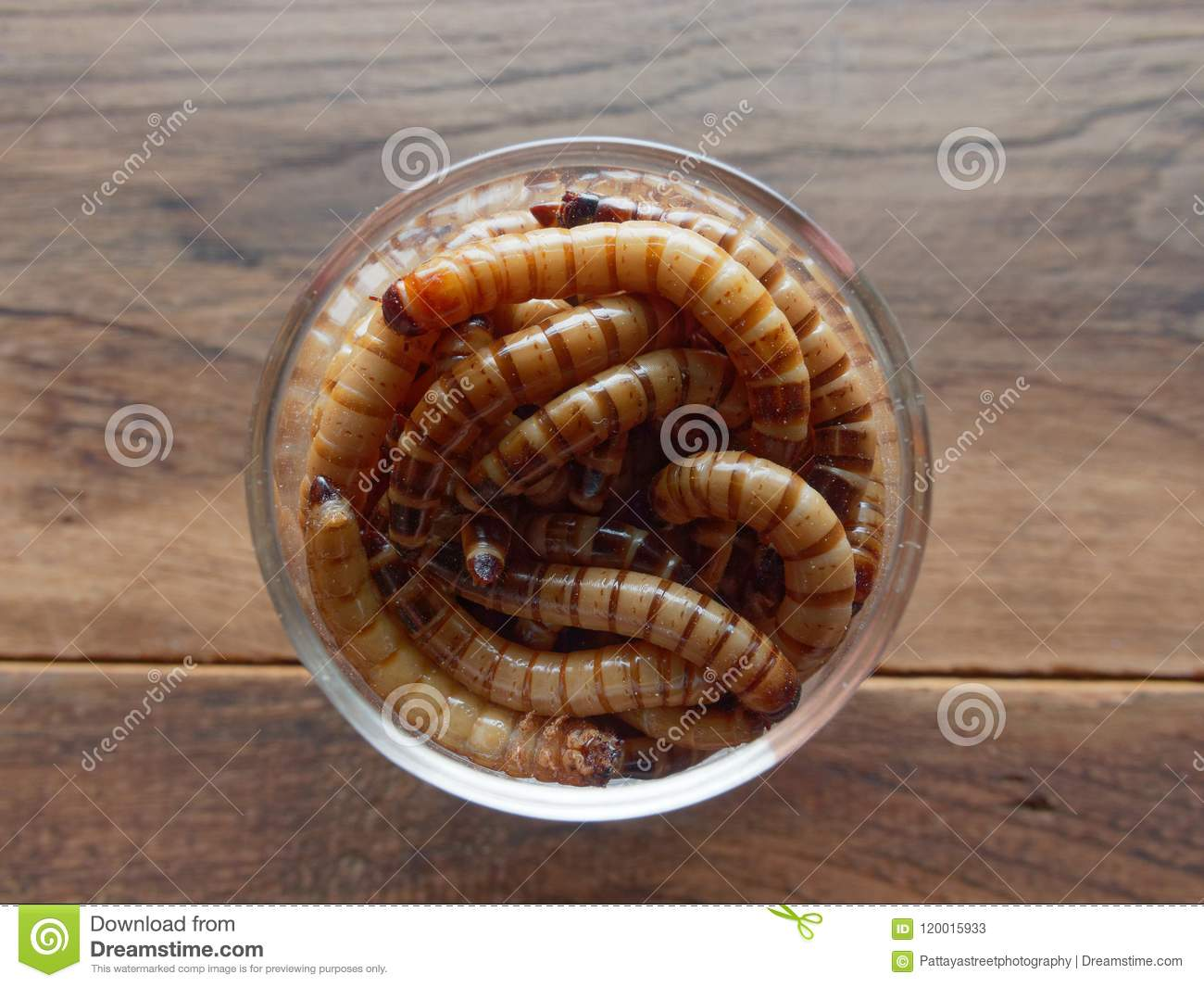 A Group Of Super Or Giant Worms Crawl Inside Small Brandy
