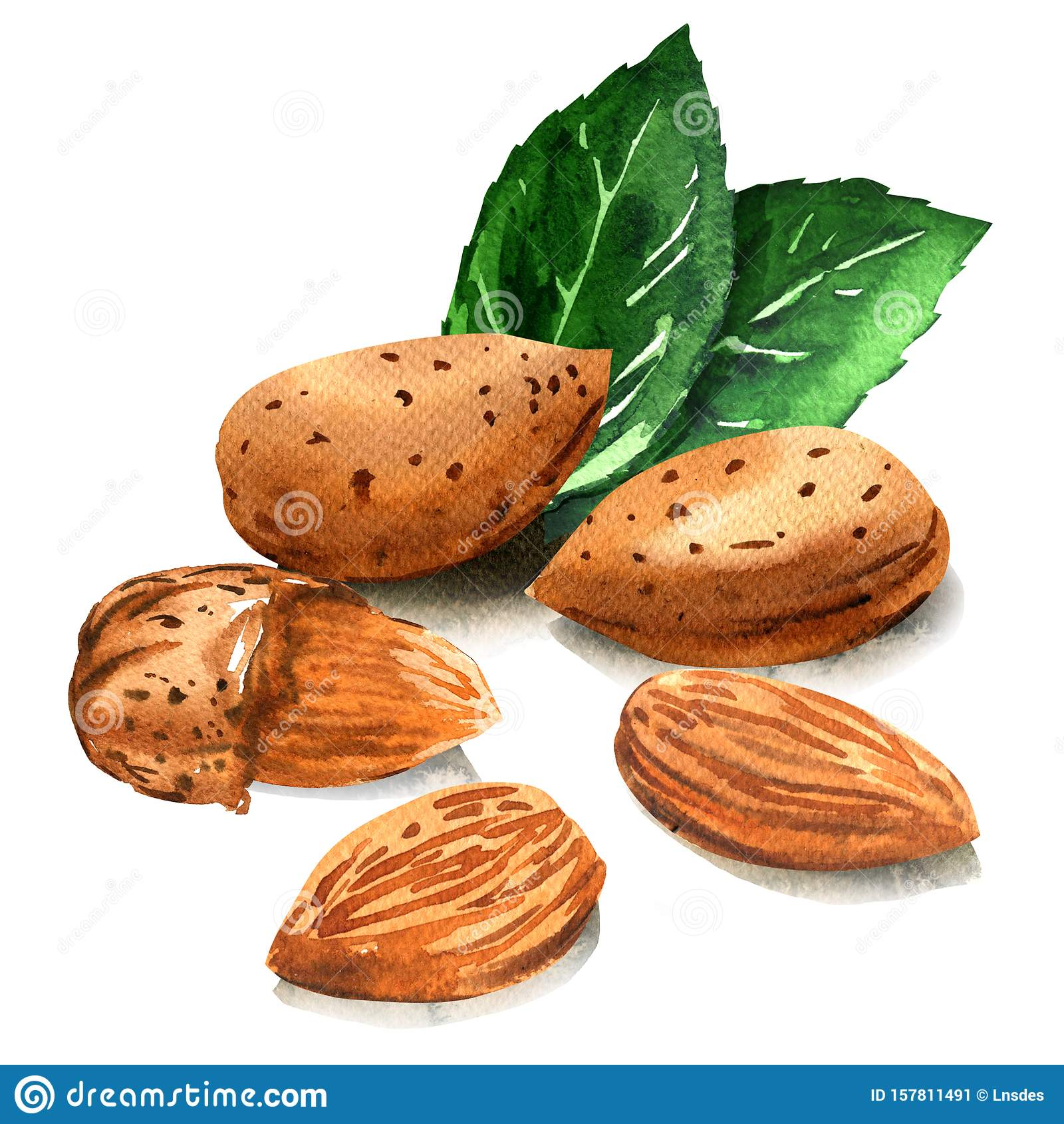 Group of tasty almond nut with green leaves, whole nuts in skins and peeled, isolated, hand drawn watercolor