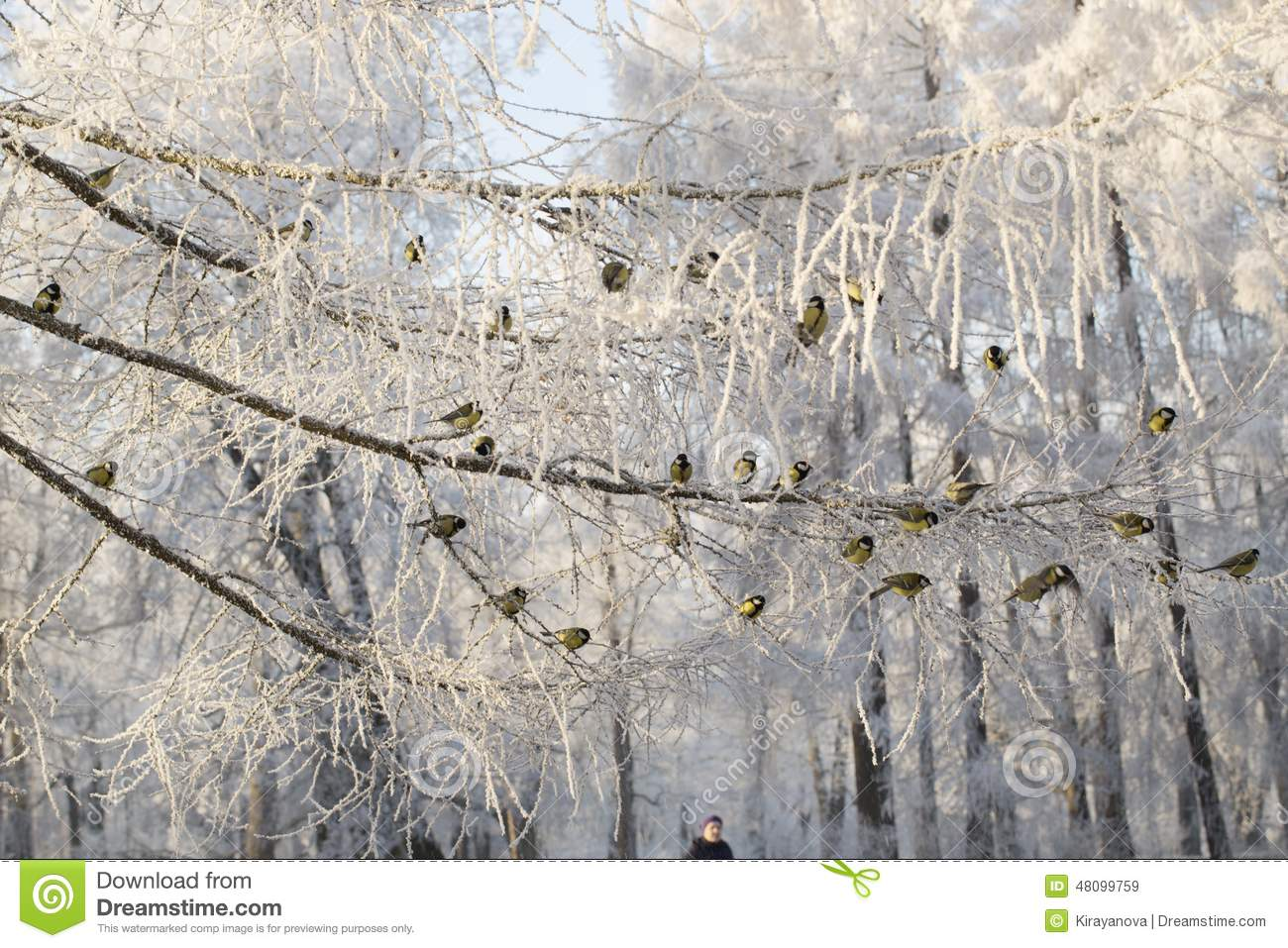 Group of titmouses among snow-covered branches