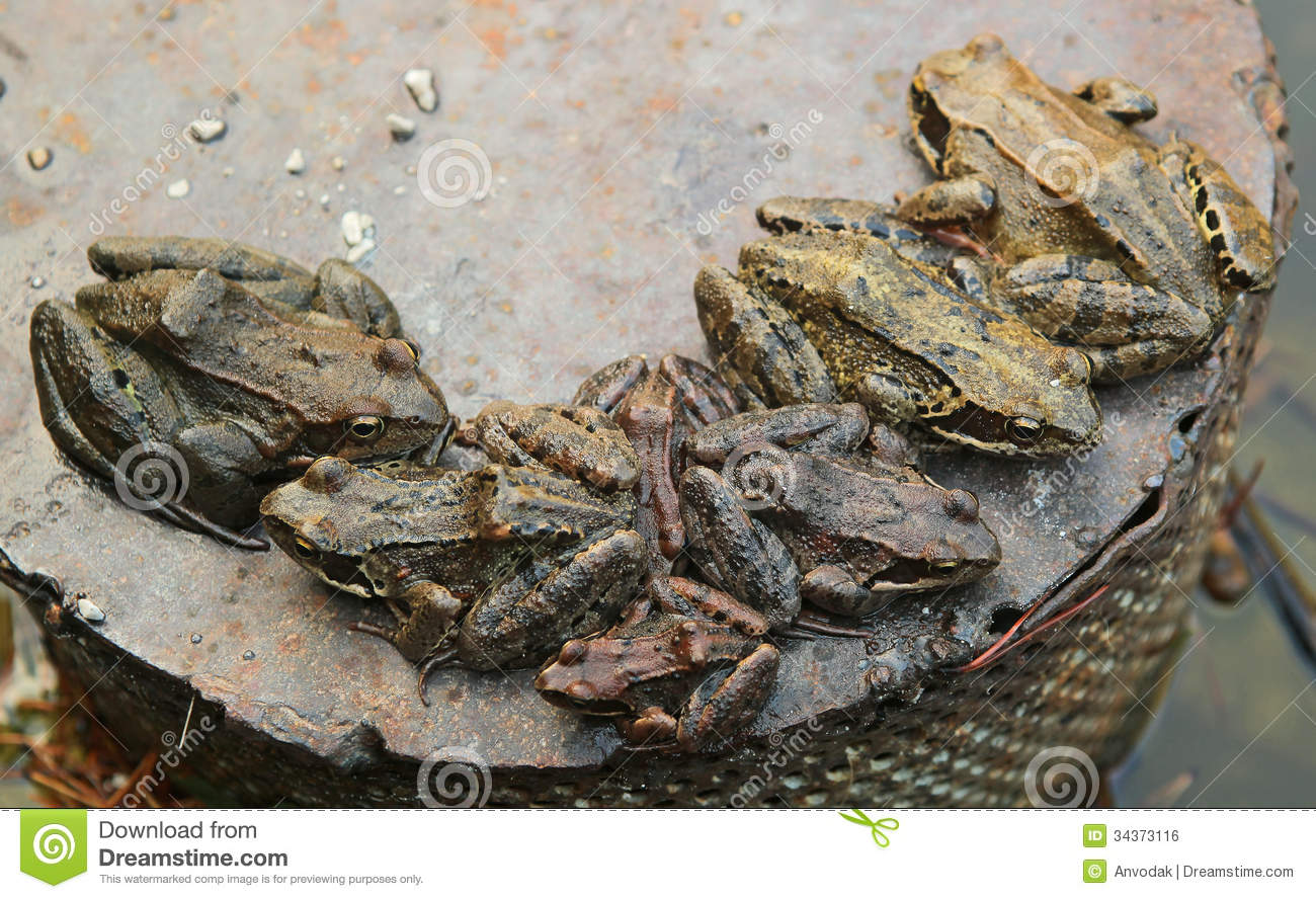What Is A Group Of Toads Called 118