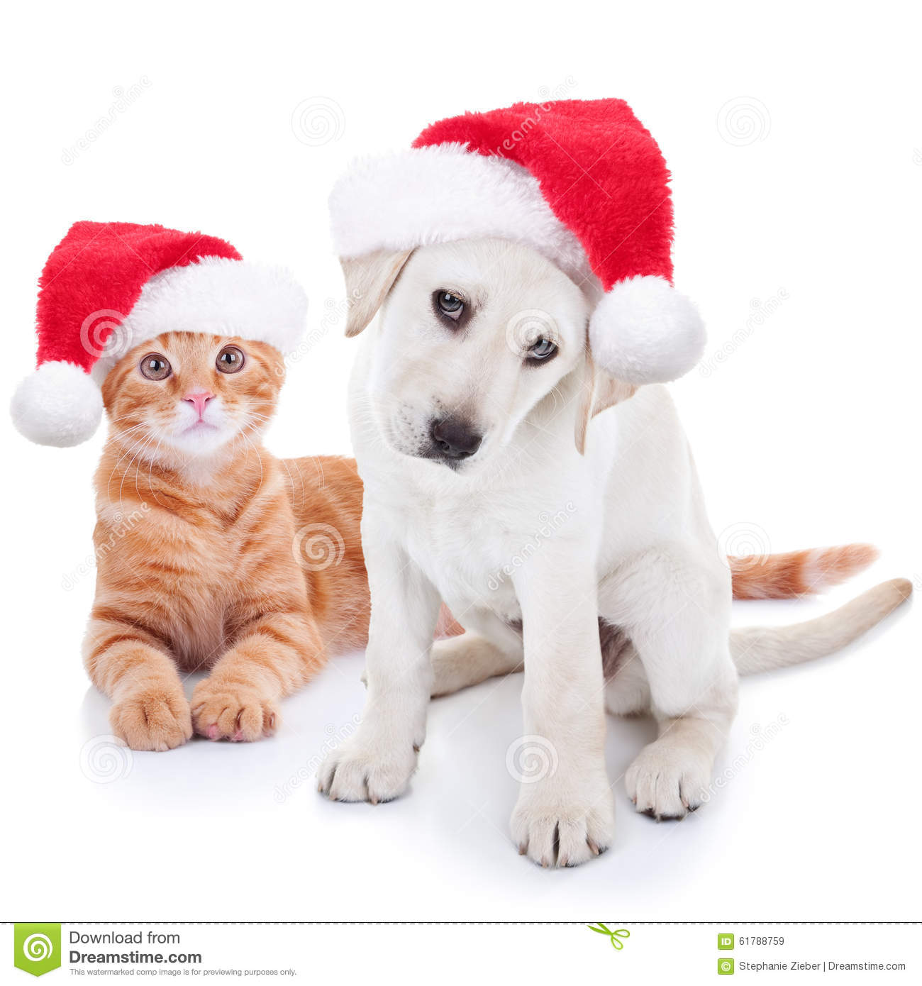 Christmas Pets Dog And Cat Stock Image Image Of Cats 61788759