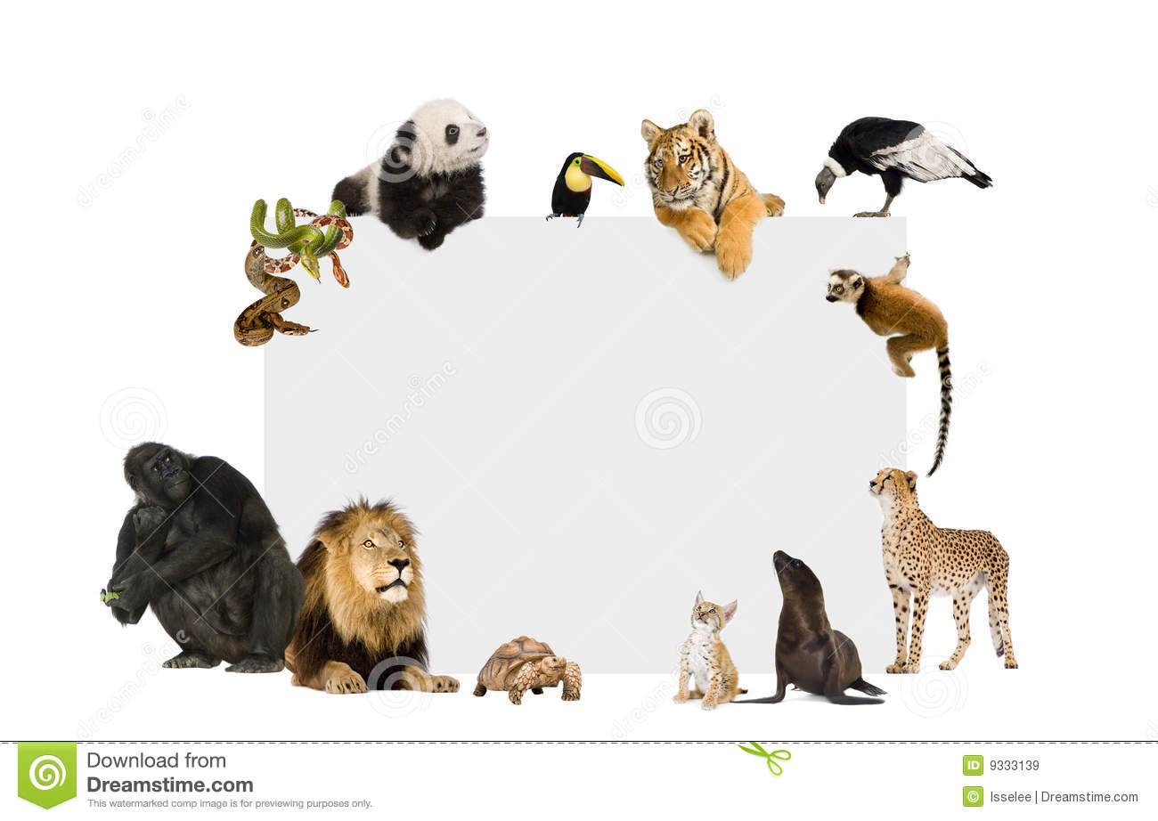 Group of wild animals together - photo#9