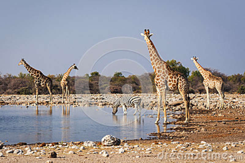 Group of wild animals near a waterhole in the Etosha National Park, in Namibia