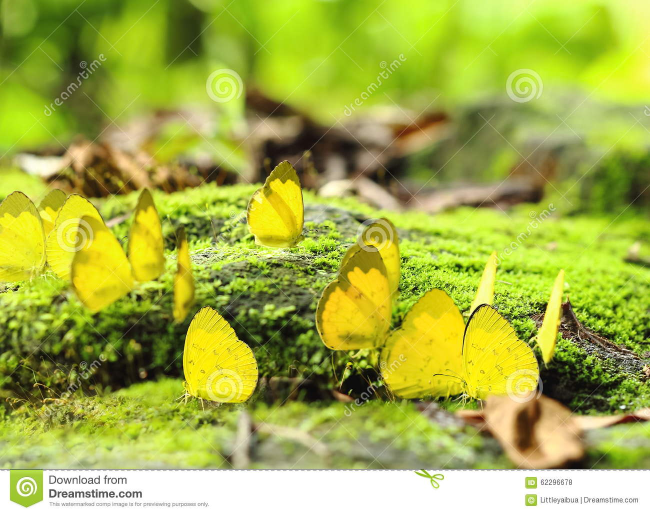 Free Blue and yellow butterfly Wallpaper - Download The Free Blue ...