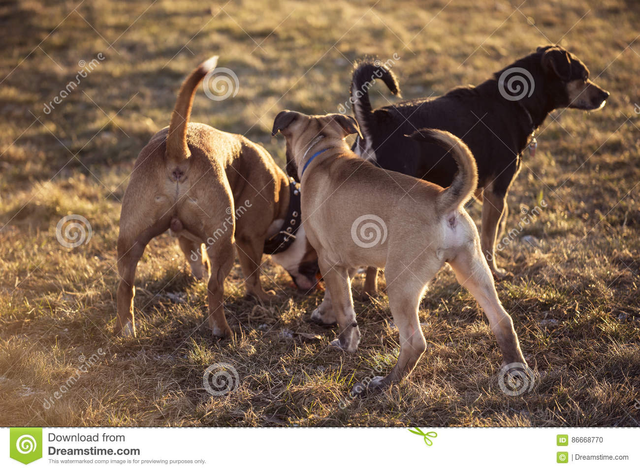 Group of young dogs playing outside