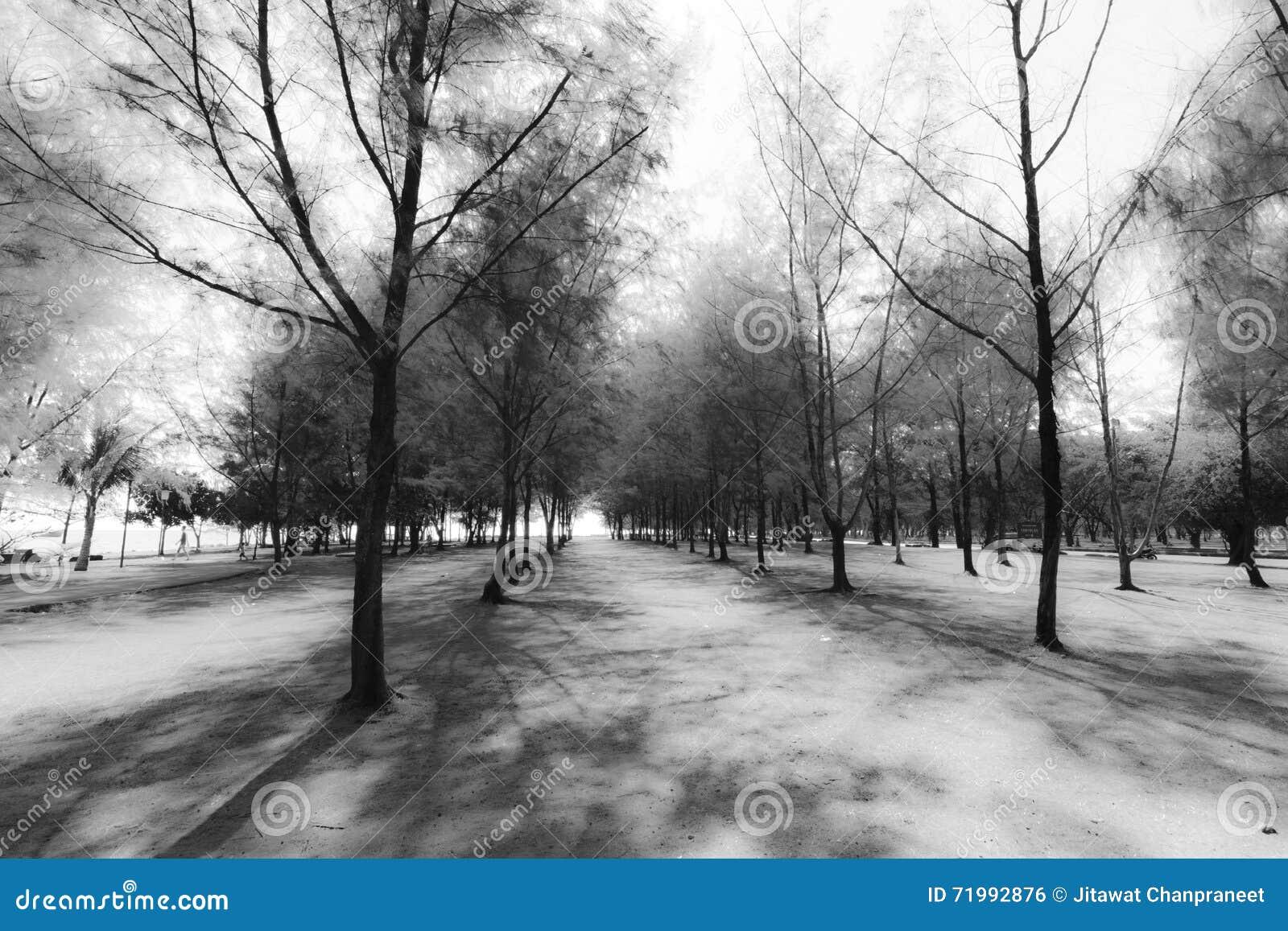 Groupe abstrait de fond noir et blanc de pin
