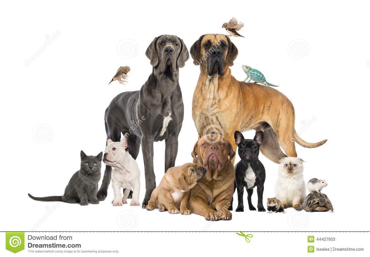 Groupe d animaux familiers - chien, chat, oiseau, reptile, lapin