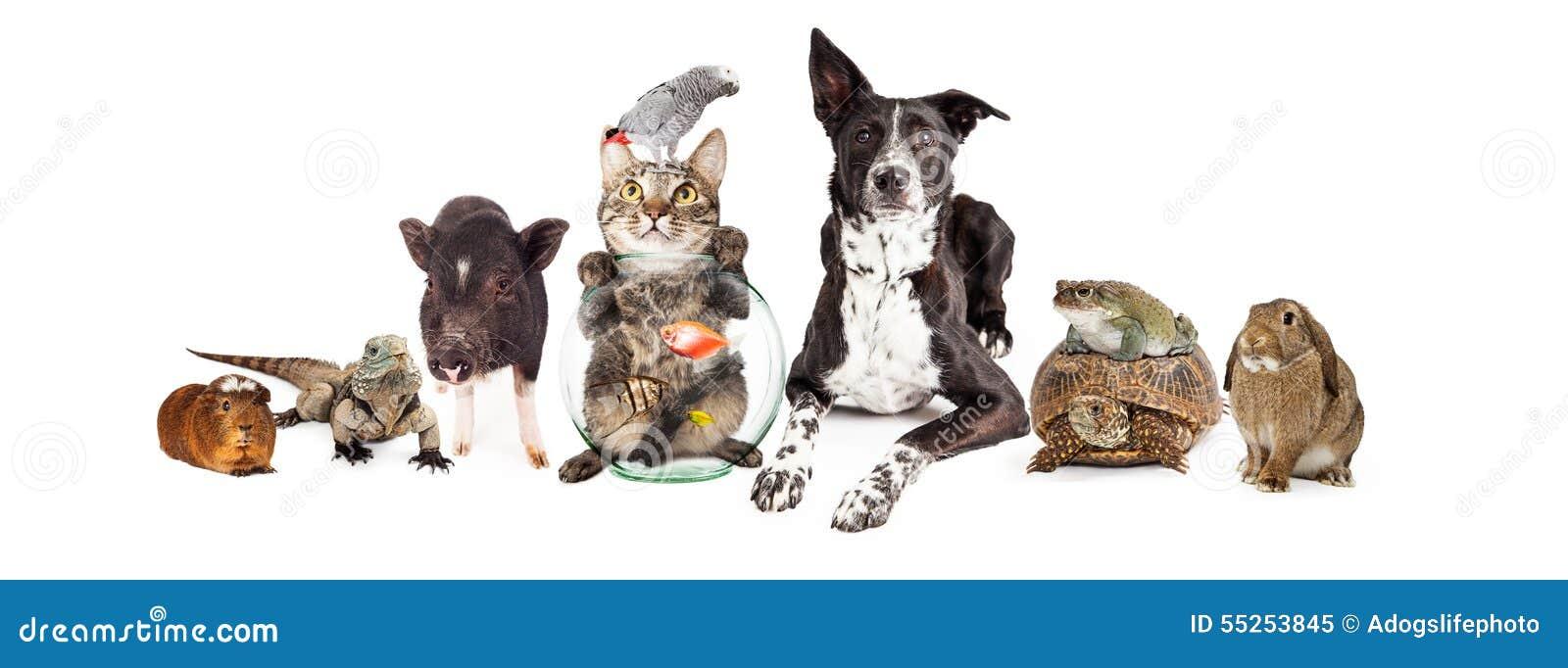 Groupe d animaux familiers domestiques se reposant ensemble