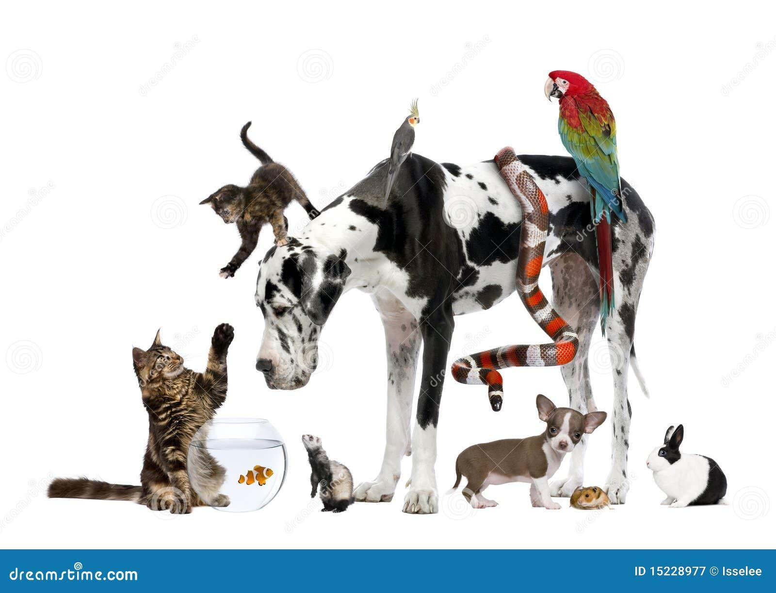 Groupe d animaux familiers ensemble