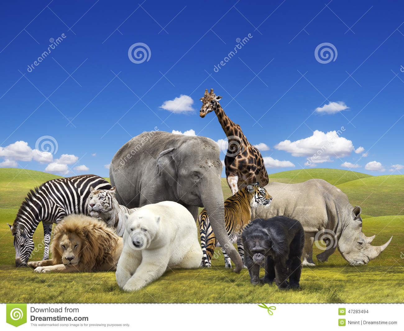 Groupe d 39 animaux sauvages photo stock image du collage - Images d animaux sauvages gratuites ...