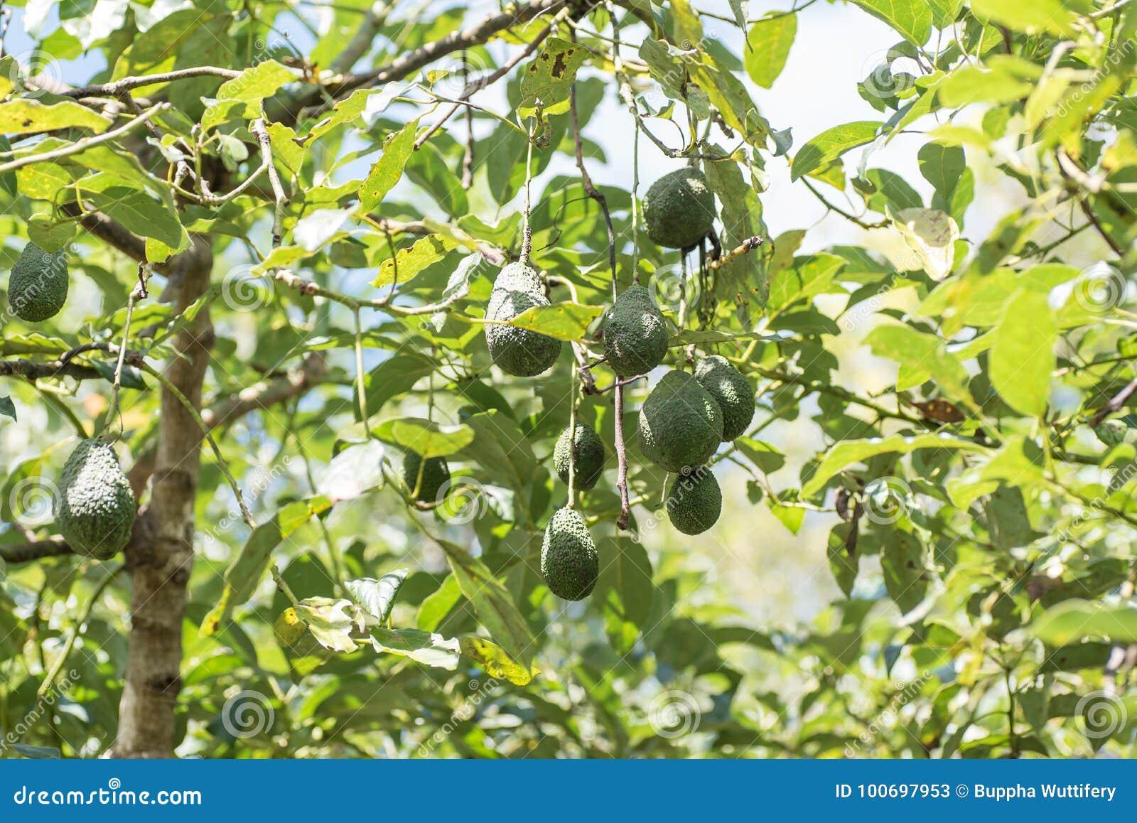 groupe d'avocat accrochant sur l'arbre image stock - image du