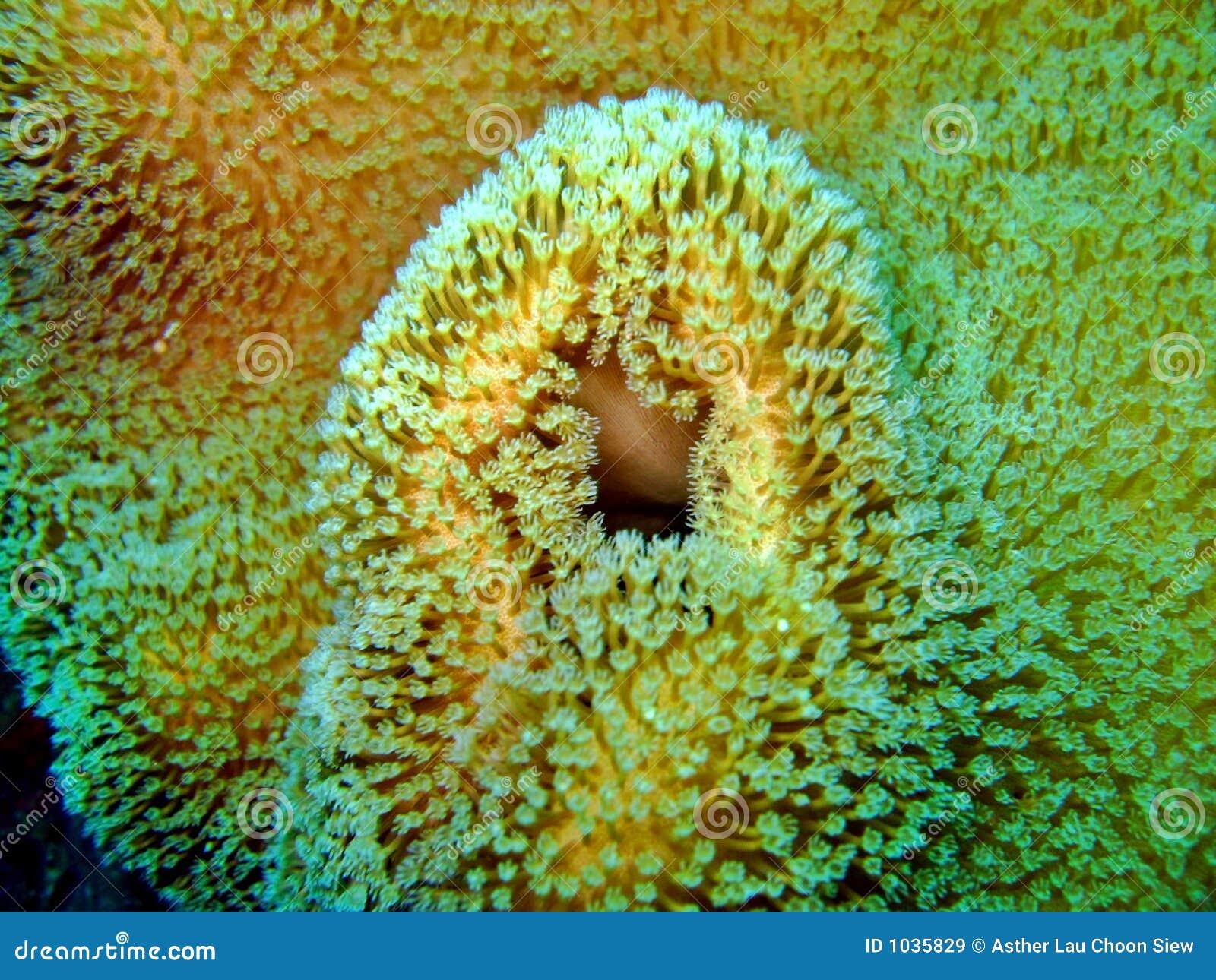 Groupe de corail marin