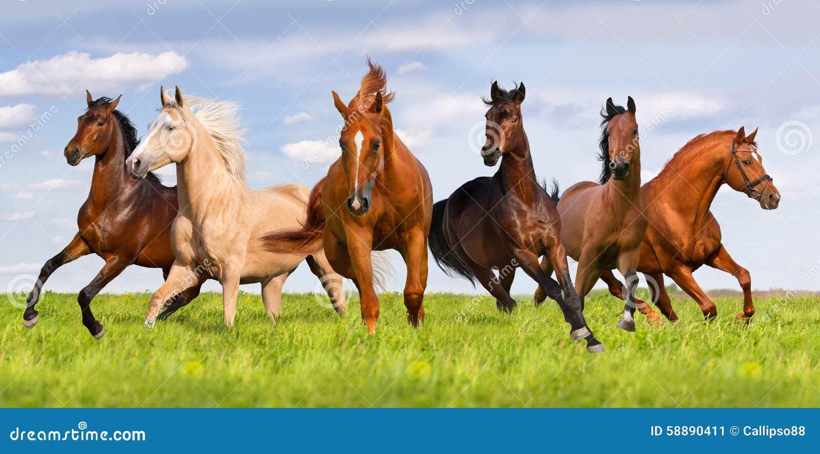 Groupe de course de cheval