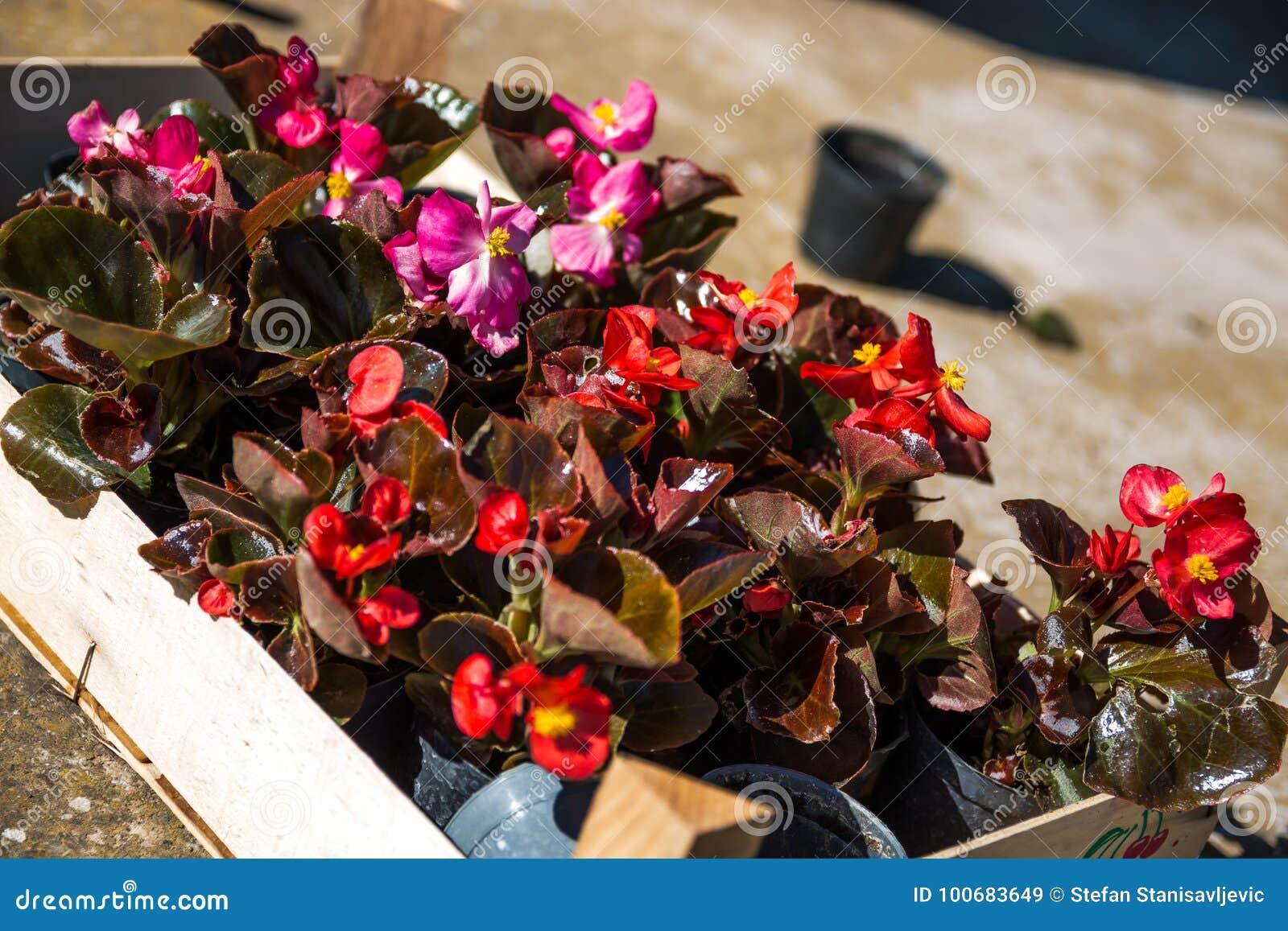 Groupe de fleurs pour la plantation