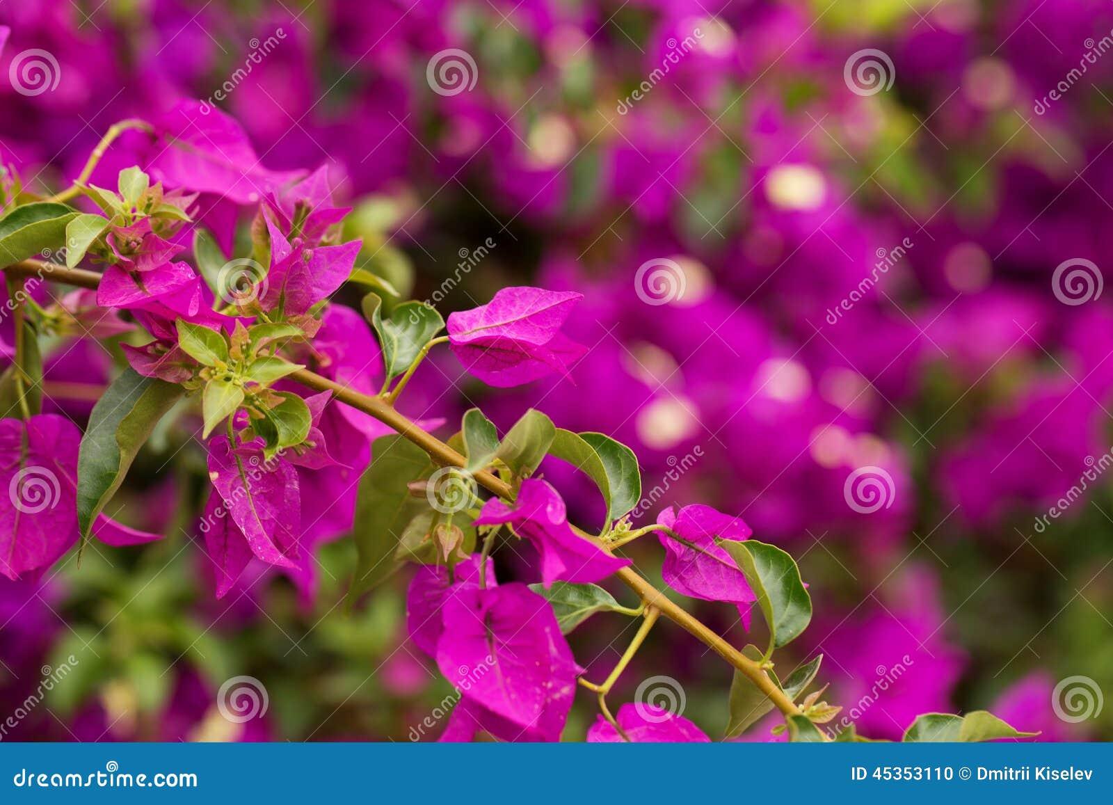 Groupe de fleurs pourprées