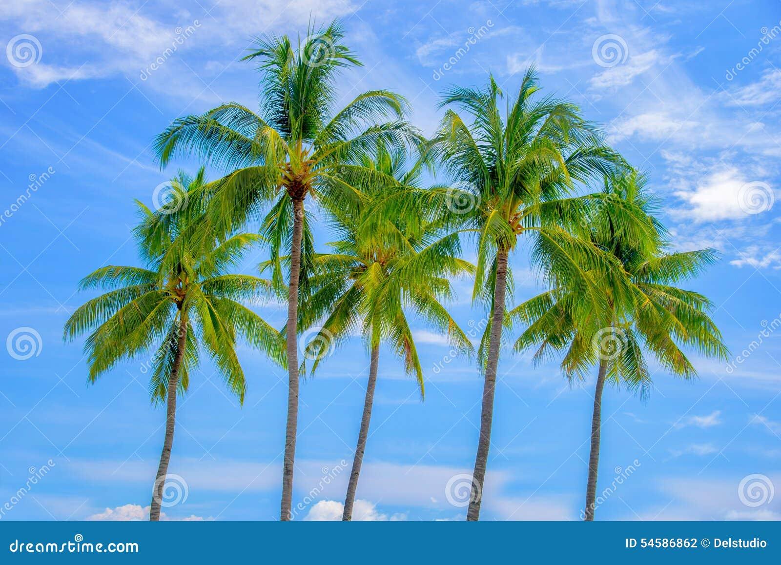 Groupe de palmiers, ciel bleu
