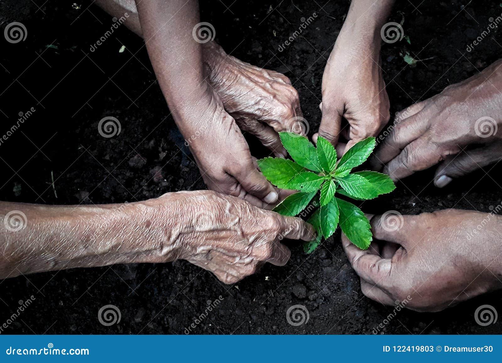 Groupe de personnes plantation