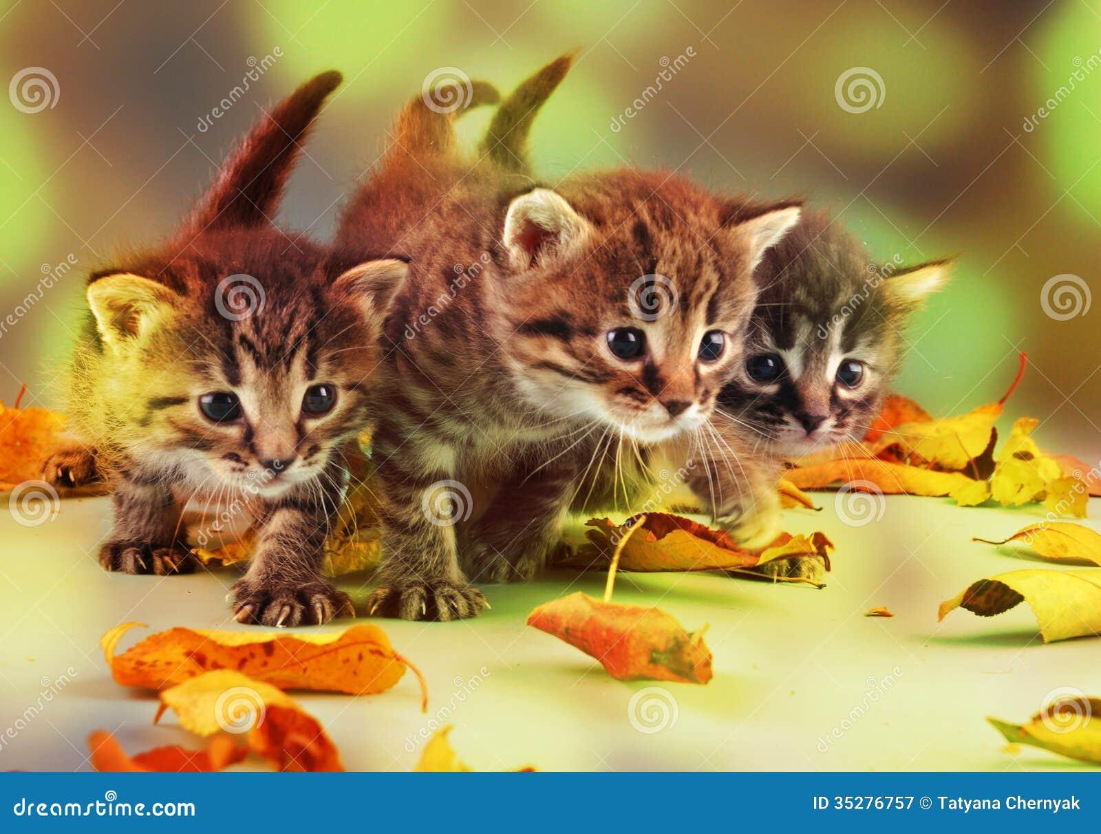Groupe de petits chatons dans des feuilles d automne