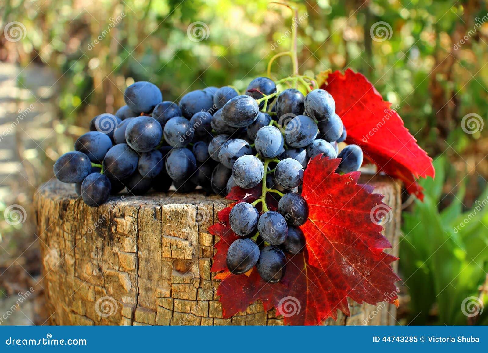 Groupe de raisins avec des feuilles