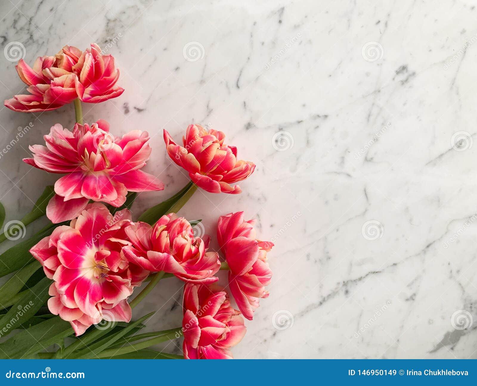 Groupe de rose fraîche et de tulipes roses de pivoine des Pays-Bas sur le fond de table de marbre blanc et gris, vue supérieure