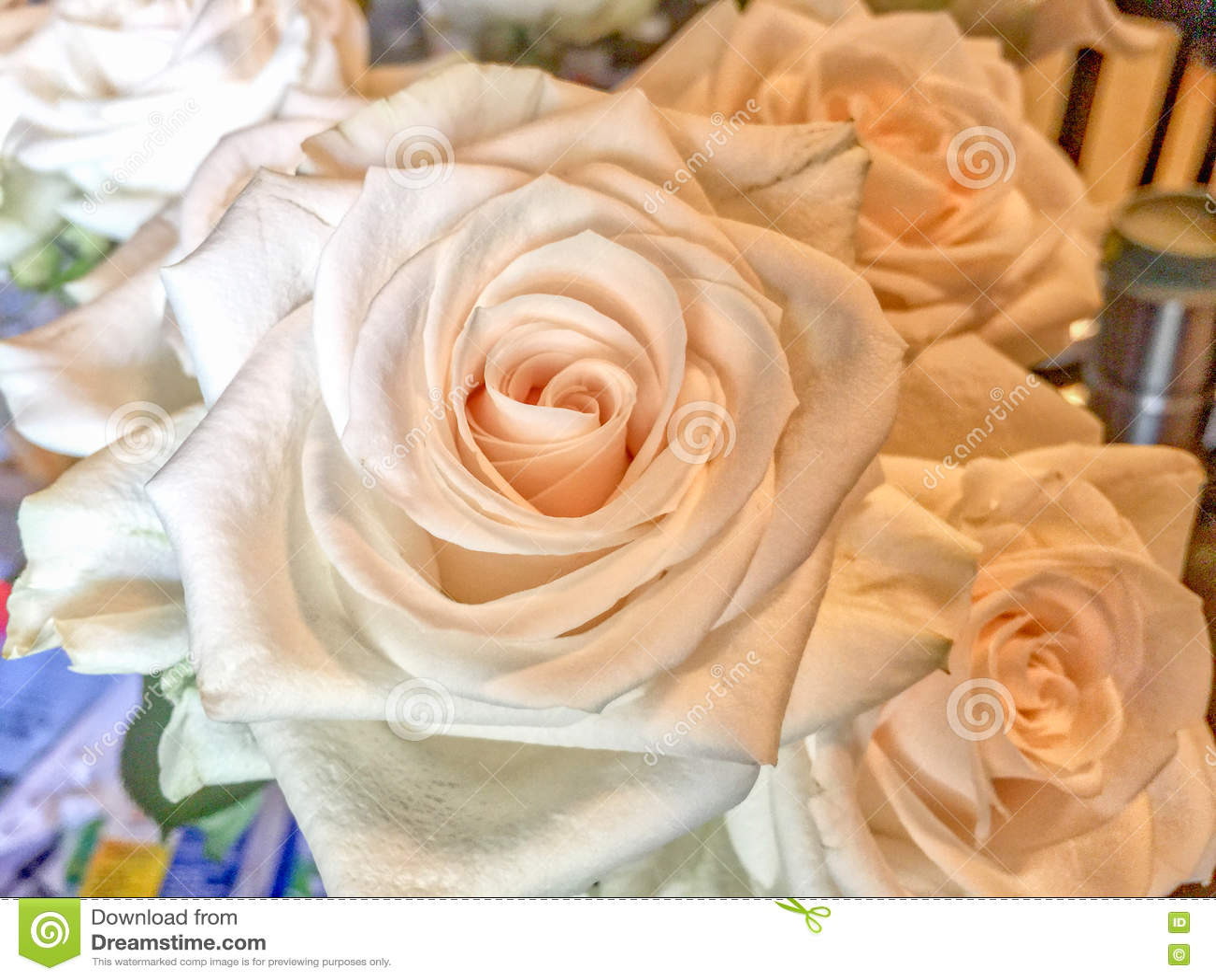 Groupe de roses fraîches