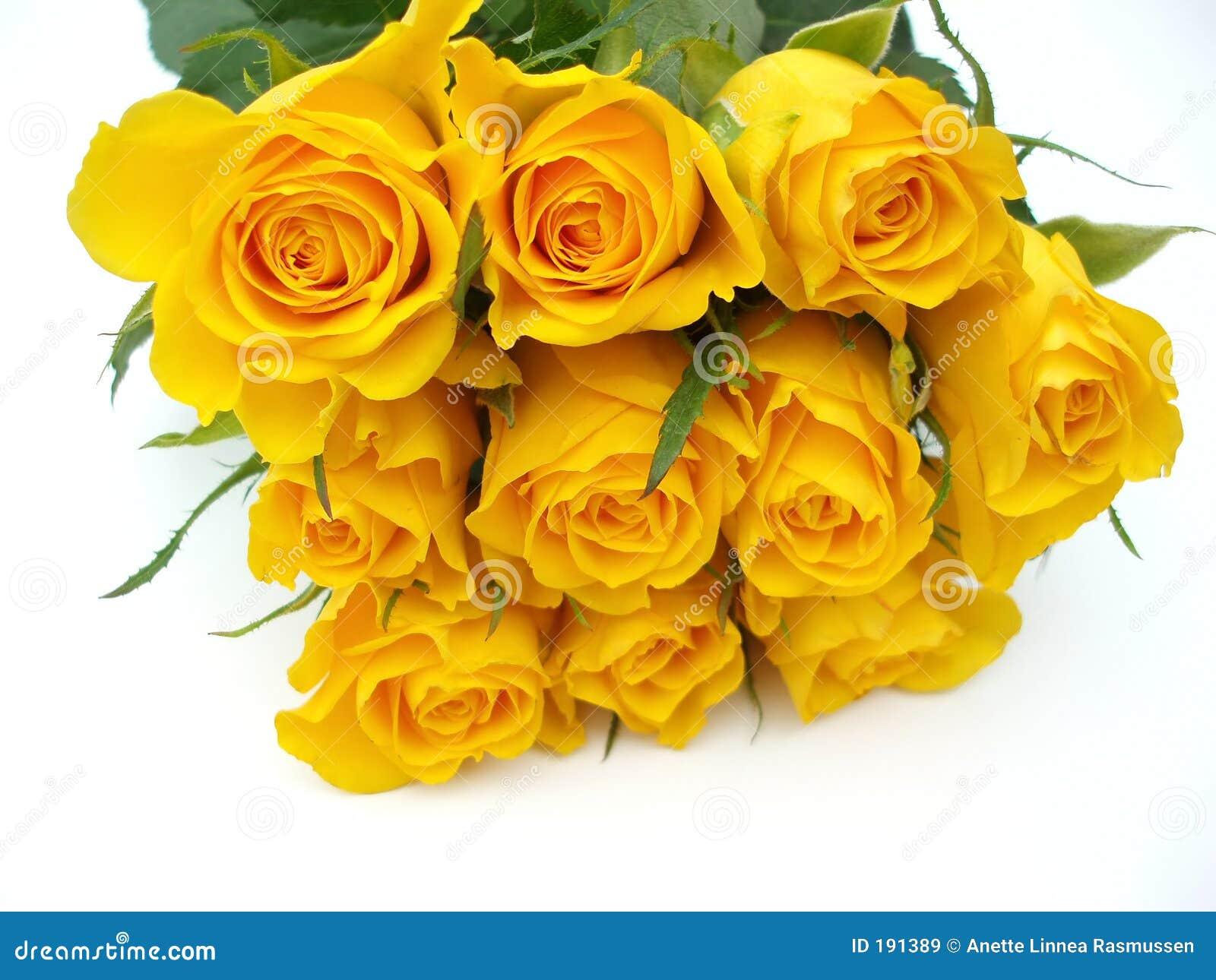 Groupe de roses jaunes