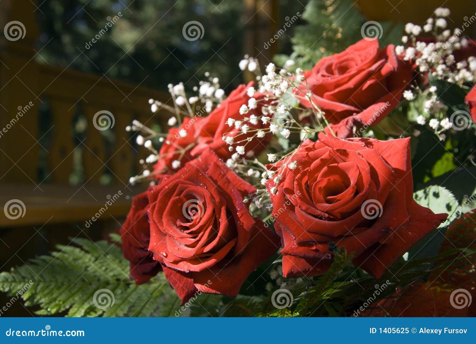Groupe de roses rouges