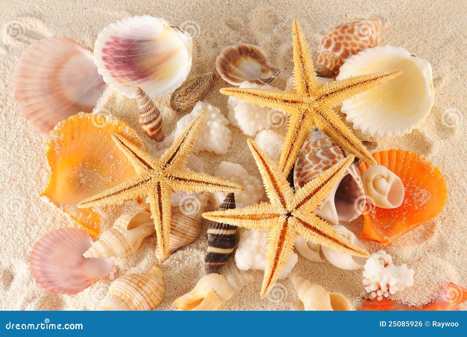 Groupe de Seashells