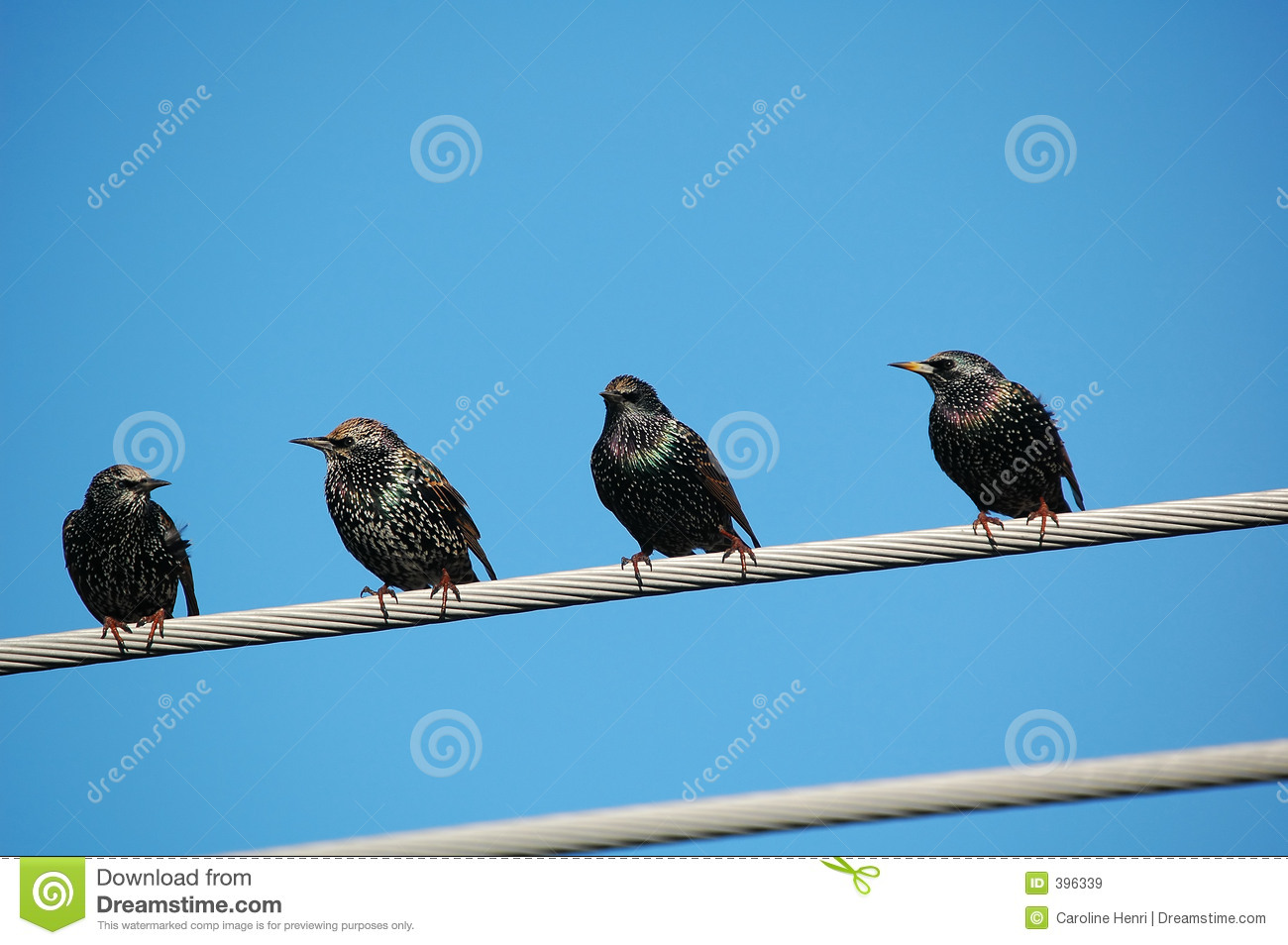 Groupe de starling