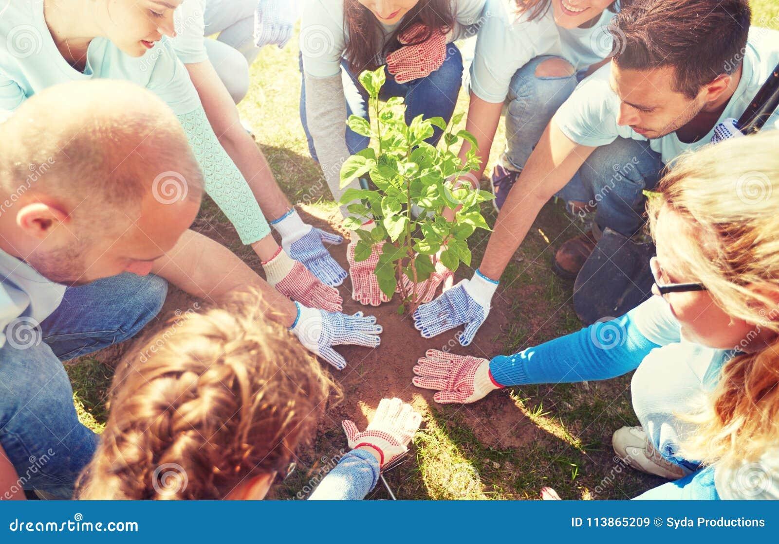 Groupe de volontaires plantant l arbre en parc