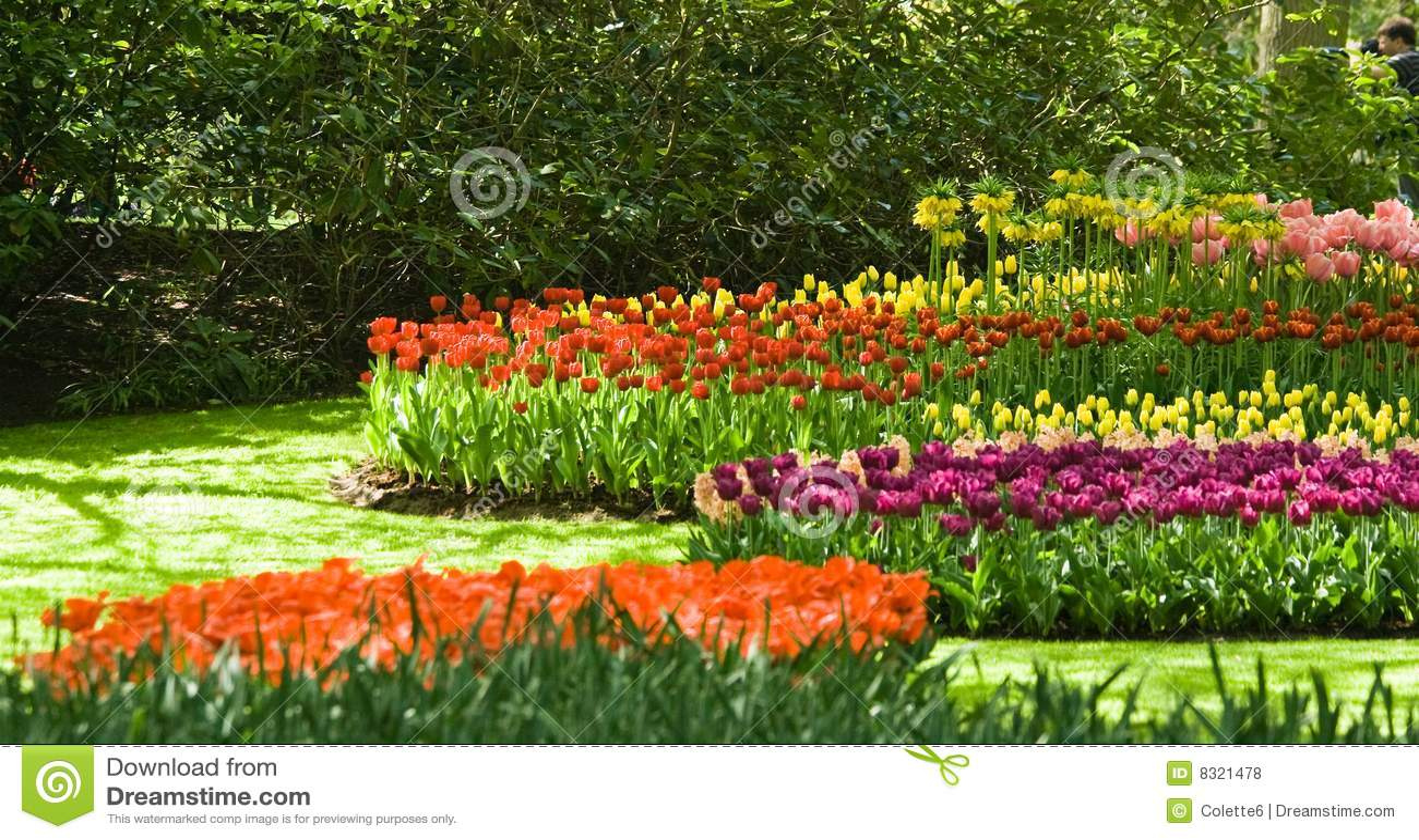 Groupe des tulipes