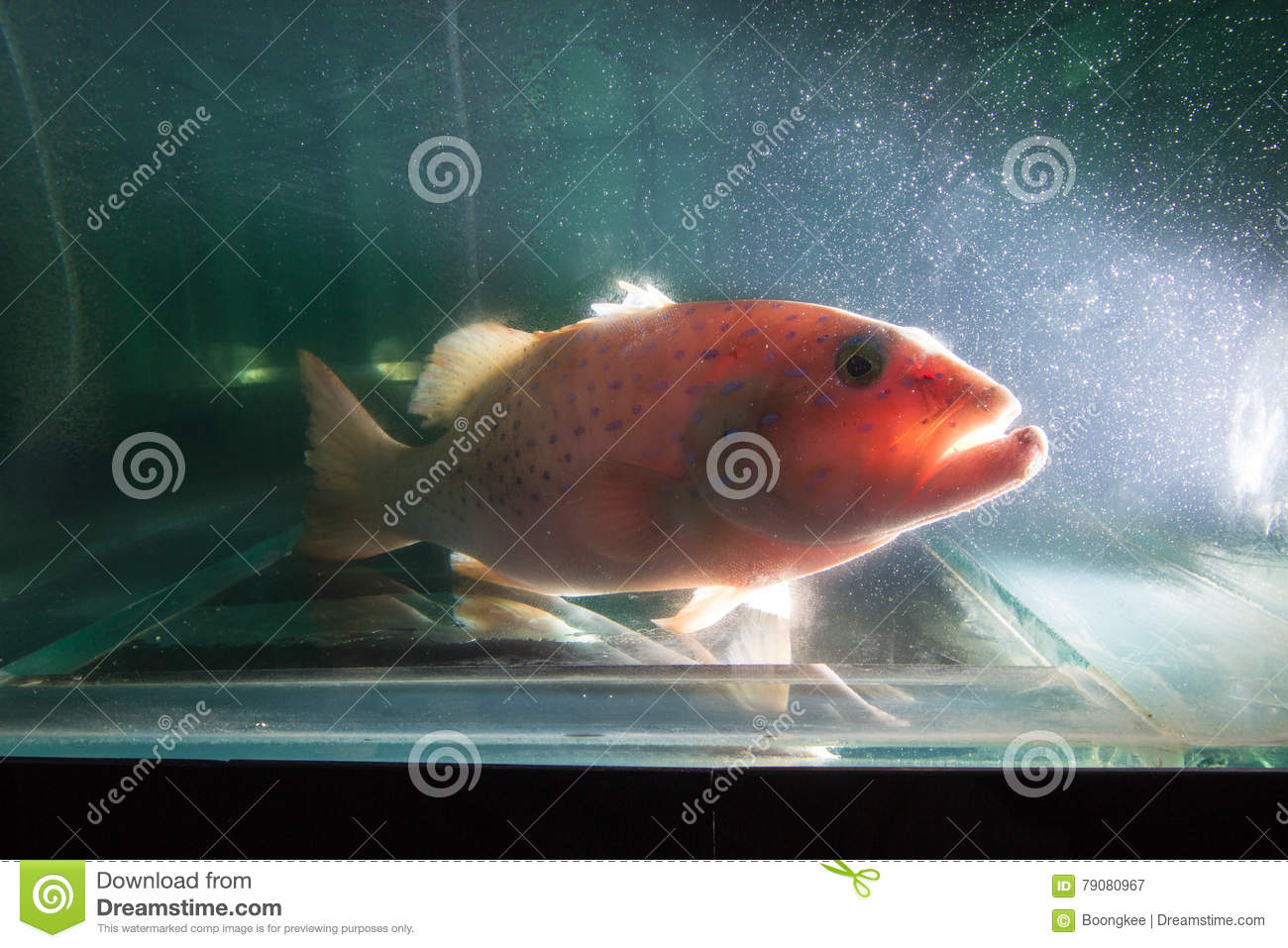 Grouper Fish Grouper Fish Under Water Stock Image - Image of fish