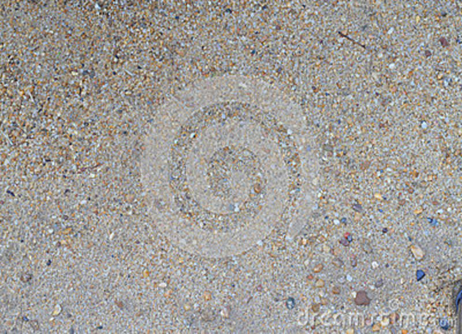 Grov bakgrund för sandtexturabstrakt begrepp