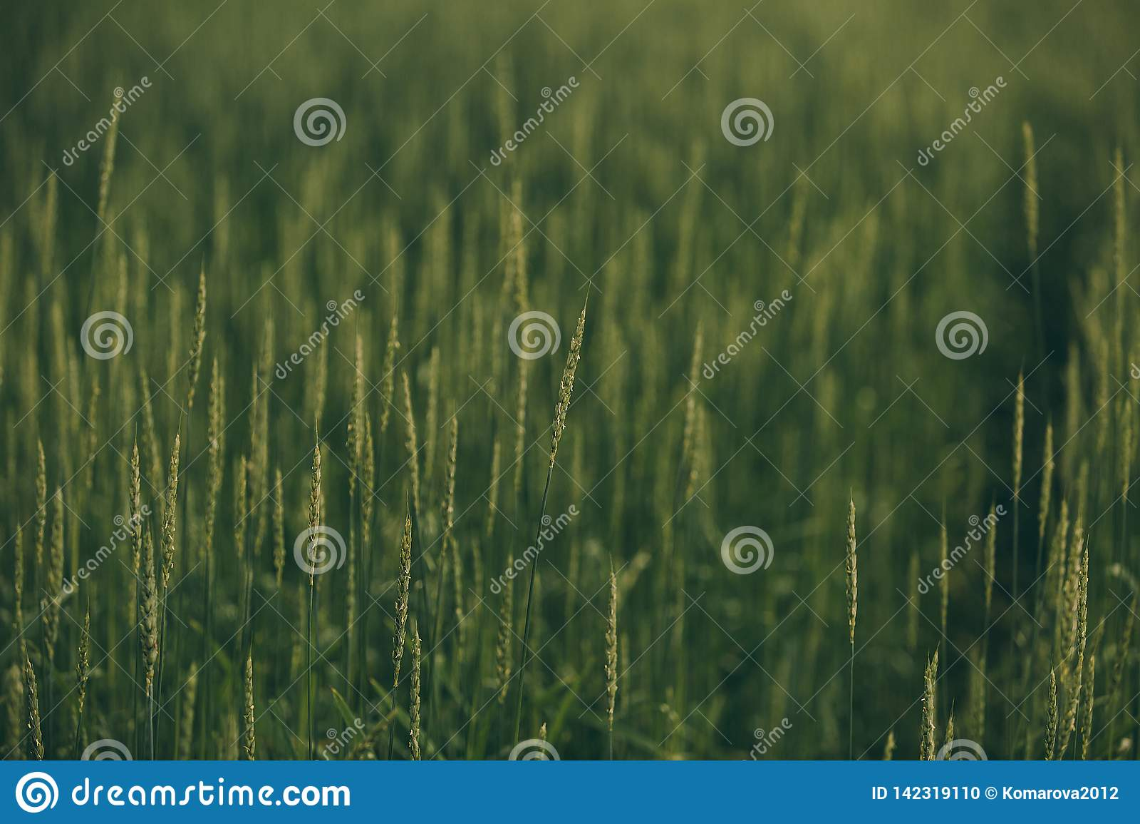 Grova spikar i ett grönt fält