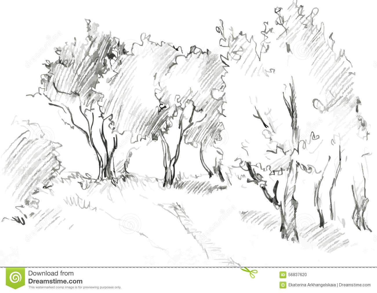 Grove Of Deciduous Trees Stock Vector. Image Of Cartoon