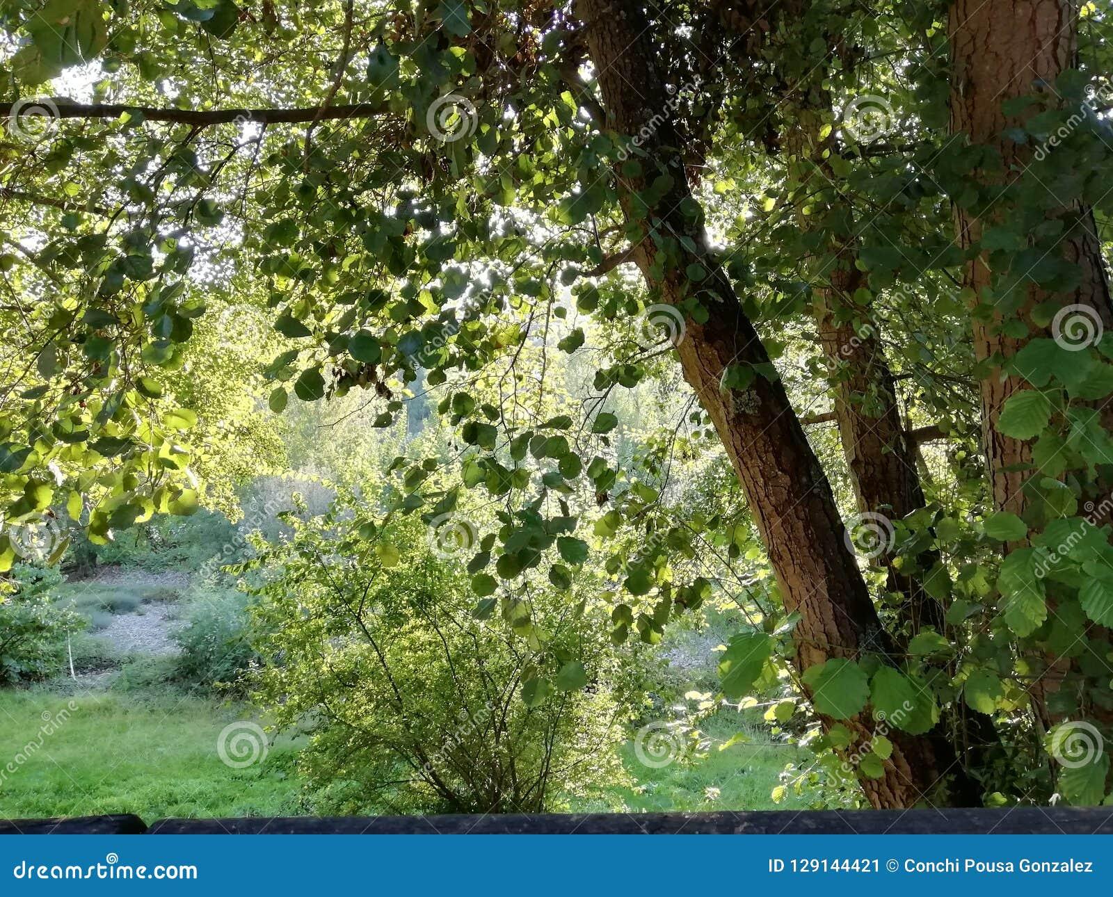 Grove near the river