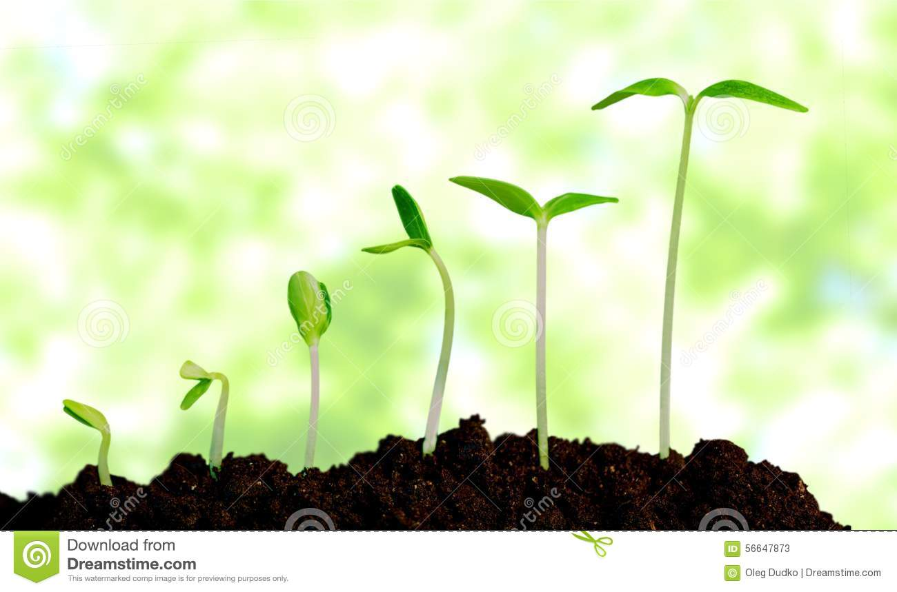 grow  growing  plant stock photo image 56647873 flower garden clip art free flower garden clipart black and white