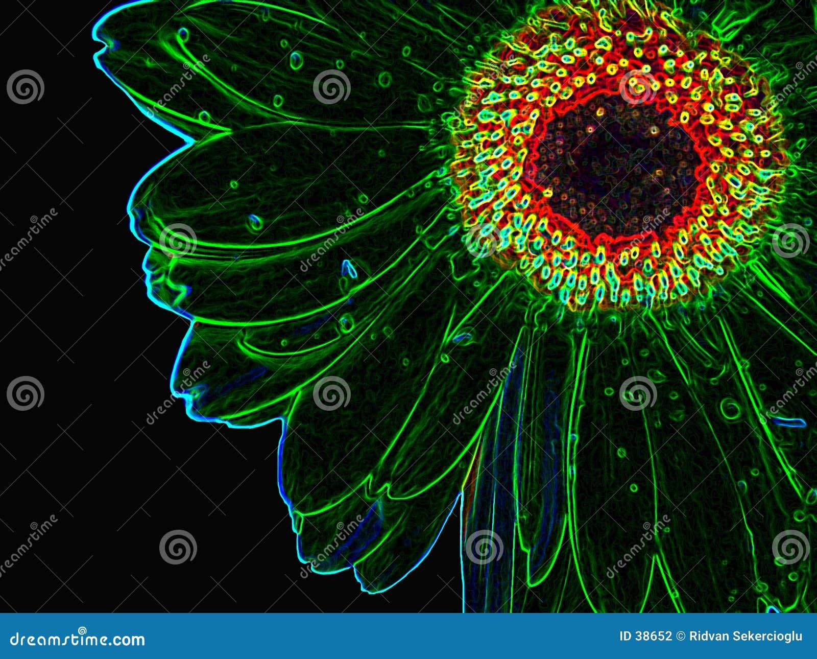 Download Growed au néon de fleur photo stock. Image du bord, bords - 38652