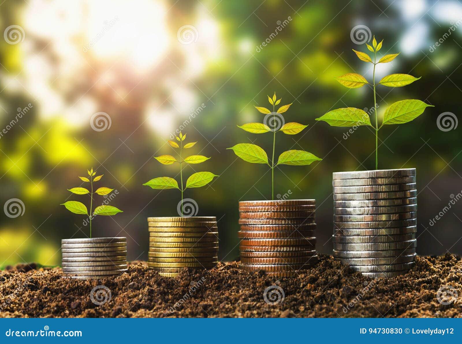 Growht del dinero en el concepto del suelo y del árbol, finanzas del éxito empresarial