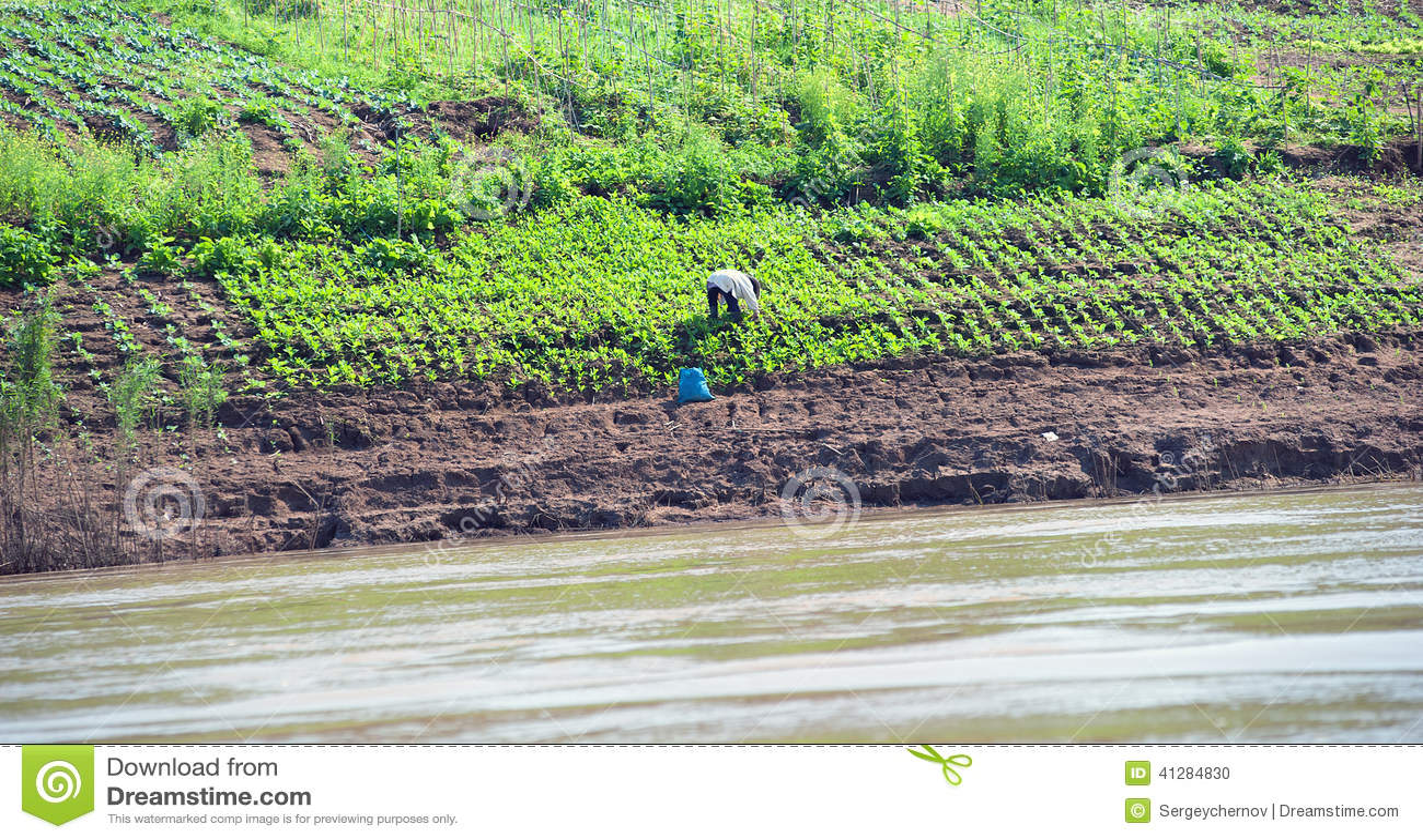 Growing Crops On River Banks. Mekong River Cruise Stock Photo - Image: 41284830