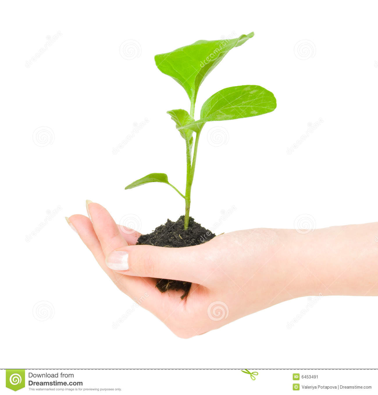 Growing green plant in a hand