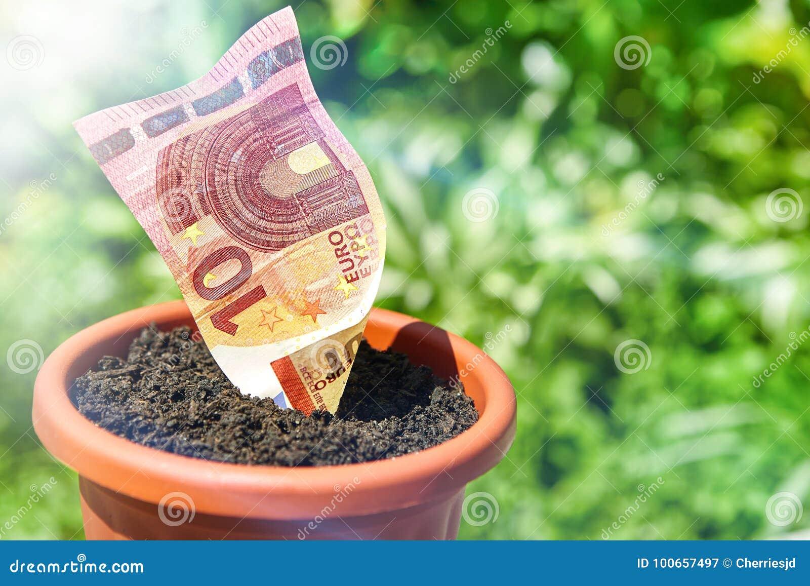 Growing money in flowerpots