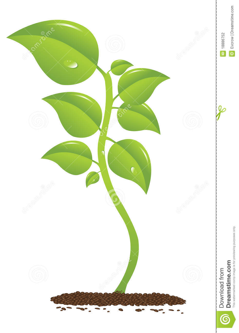 Growing Plant Stock Vector Image Of Decoration Tree