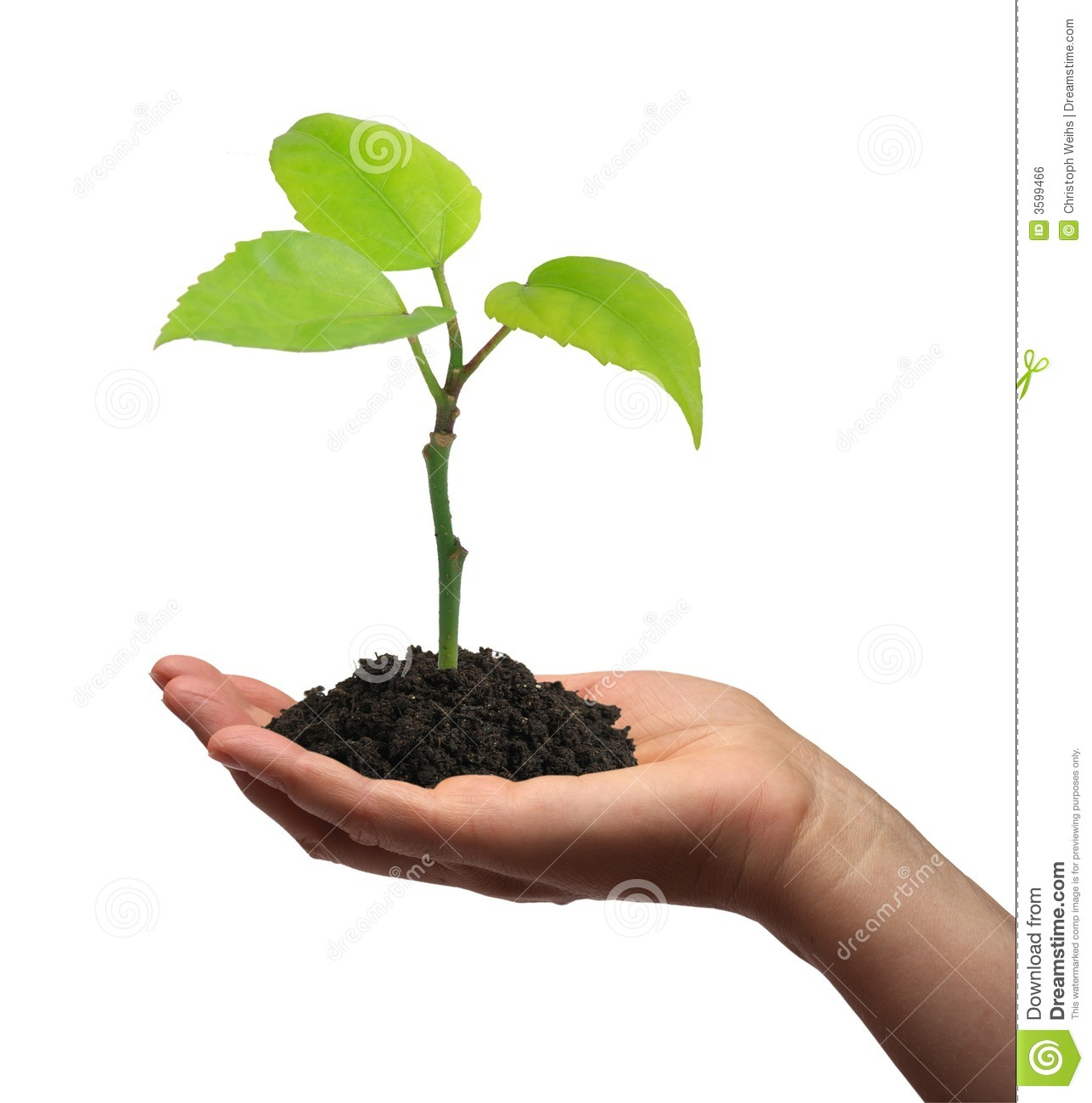 Growing Plant Royalty Free Stock Image - Image: 3599466