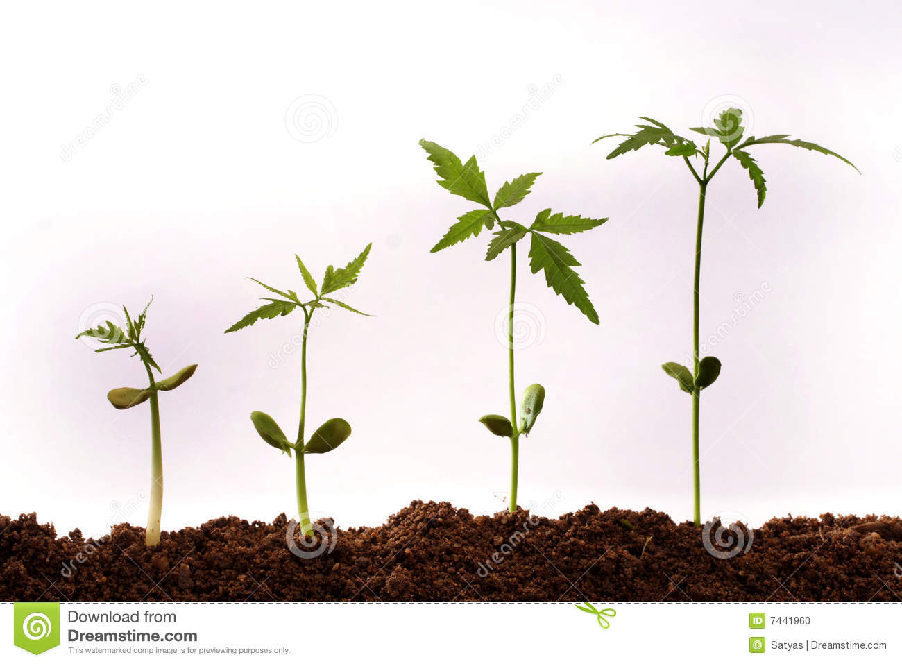 growing plants stock photo image of green background 7441960